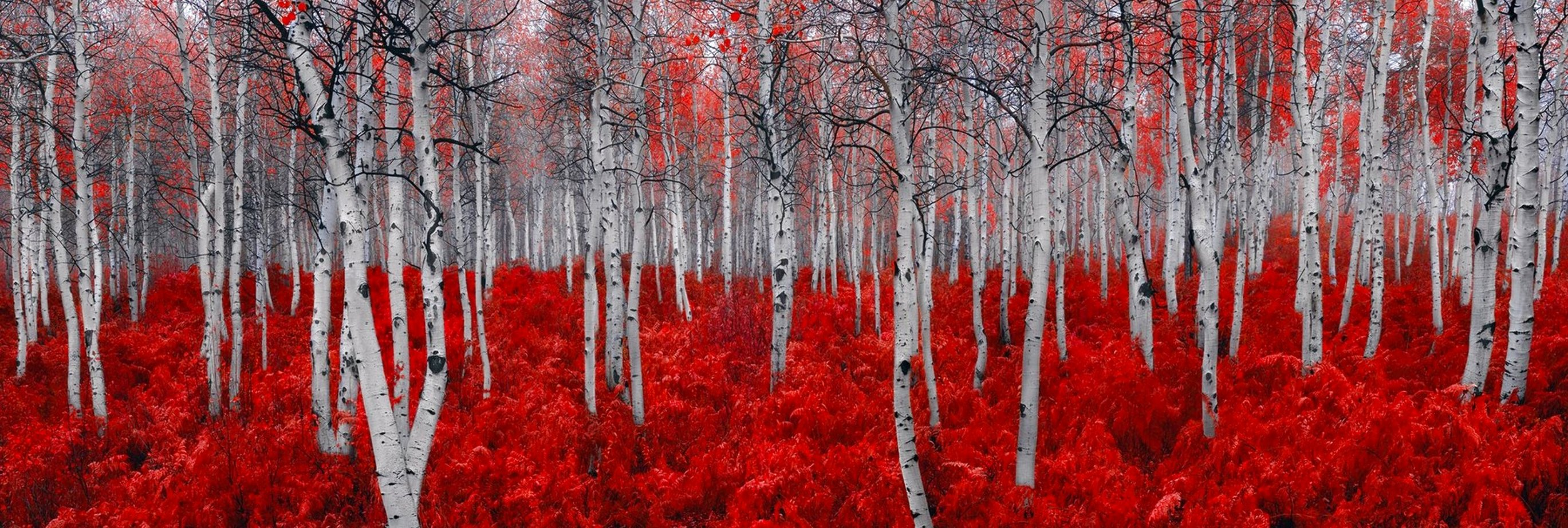 Rouge 1,5M Huge Panorama by Peter Lik