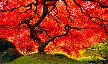 Tree of Life 2M Super Huge Panorama - Peter Lik