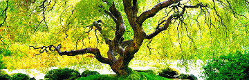 Serenity Tree 1.5M  Huge Panorama - Peter Lik