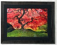 Tree of Life 1.5m Panorama by Peter Lik - 1