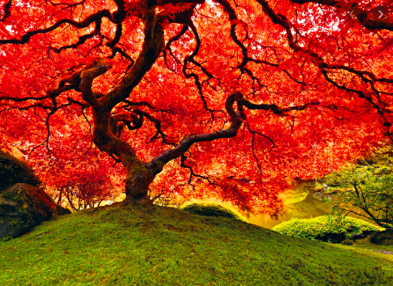 Tree of Life 1.5m Panorama by Peter Lik