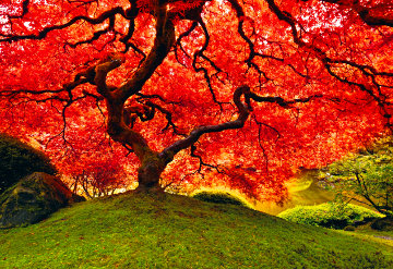Tree of Life 1.5M  Huge   Panorama - Peter Lik