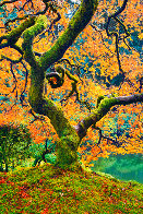 Tree of Beauty Panorama by Peter Lik - 0