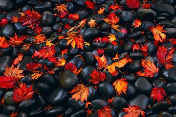 Autumn Moods 1.5M Super Huge Panorama - Peter Lik