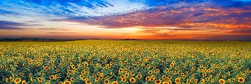 Summer Dreams 1.5M  Super Huge Panorama - Peter Lik