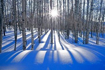 Sunlit Birches  Panorama - Peter Lik