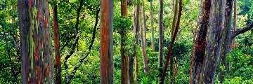 Painted Forest AP 2009 1.5M  Panorama - Peter Lik