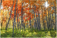 Autumn Splendour Panorama by Peter Lik - 1