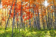 Autumn Splendour Panorama by Peter Lik - 0