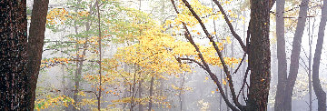 Lost  Forest 1.5M Huge Panorama - Peter Lik