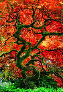 Infinity Tree 1.5M Super Huge Panorama - Peter Lik