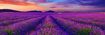 Lavender of Time 1.5M  Super Huge Panorama - Peter Lik