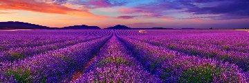 Lavender of Time 1.5M  Super Huge Panorama - Peter Lik