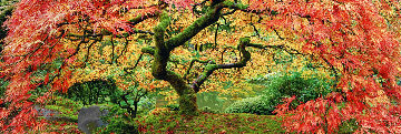 Autumn Spirit   1.5M  Panorama - Peter Lik