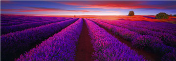 Splendour 2M Huge Panorama - Peter Lik