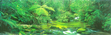 Mount Lewis Rainforest, Australia Panorama by Peter Lik