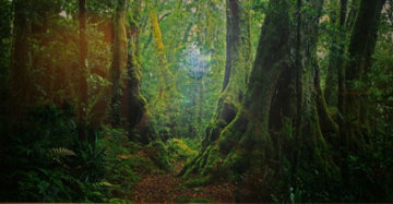 Ancient Rainforest (very small edition 100) Panorama by Peter Lik