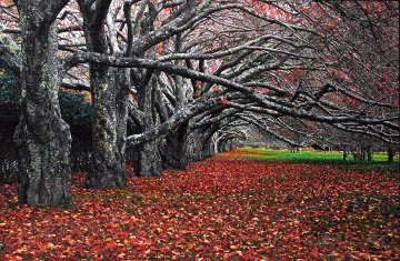 Enchanted (East Hampton, New York)  Panorama by Peter Lik