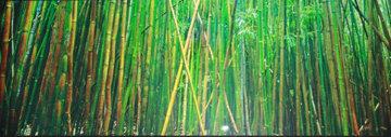 Bamboo (Pipiwai Trail, Hana, Maui Hawaii) Panorama by Peter Lik