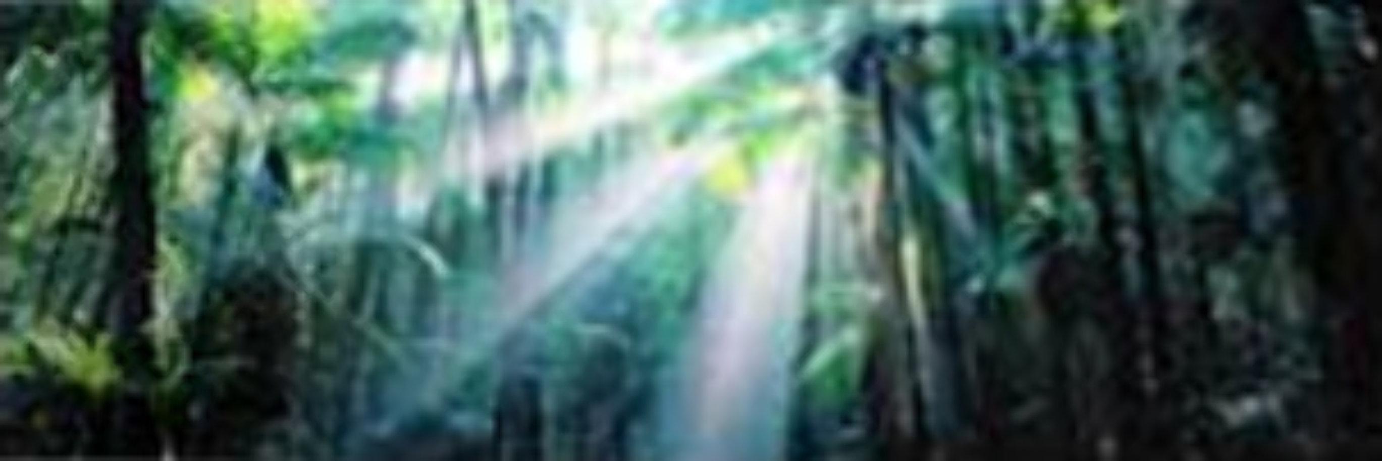 Enchanted Forest (Fraser Island, Queensland) Australia 2M Super Huge Panorama by Peter Lik