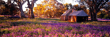 Settlers Meadow AP  (Wilpena Pond, South Australia) Panorama by Peter Lik