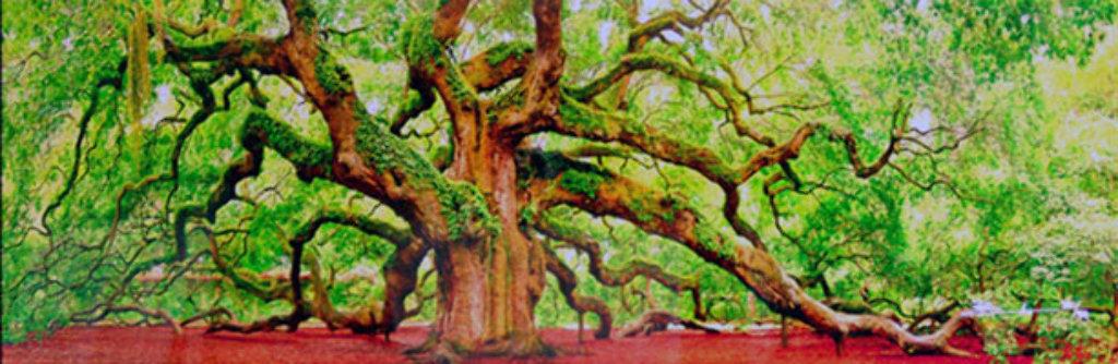 Tree of Hope Panorama by Peter Lik