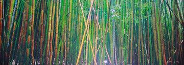 Bamboo (Pipiwai Trail, Hana, Hawaii) 1.5M Huge Panorama - Peter Lik