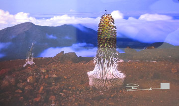Haleakala Silver Sword, Maui, Hawaii  Panorama - Peter Lik