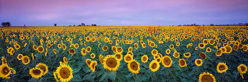 Sunflowers (small edition) Panorama - Peter Lik