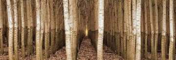Endless Forest (Boardman, Oregon) Panorama - Peter Lik