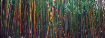 Bamboo (Pipiwai Trail, Hana, Hawaii) 1.5M Huge Panorama - Peter Lik