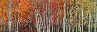 Harmony (Aspen, Colorado) 1.5M Huge Panorama by Peter Lik - 0
