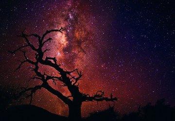 Tree of the Universe (Mauna Kea, The Big Island, Hawaii)  Panorama by Peter Lik