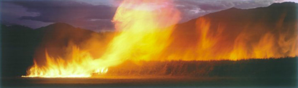 Cane Fire  (very small edition)  (Redlynch, Cairns) Panorama by Peter Lik