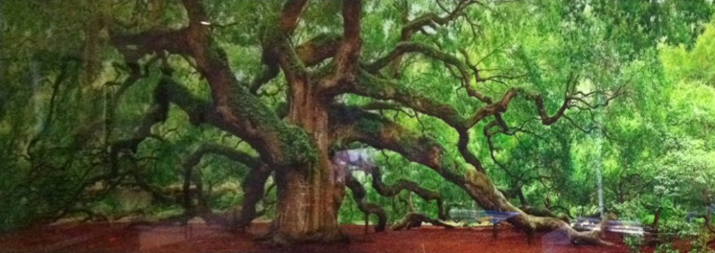 Tree of Hope & Tree of Life 2 prints Panorama by Peter Lik