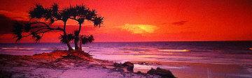 Pandanus Twilight (Frazier Island) (small edition) Panorama - Peter Lik