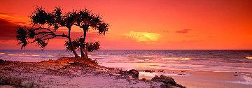 Pandanus Twilight - Frazier Island Panorama - Peter Lik
