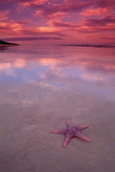 Starfish (small edition) Panorama by Peter Lik