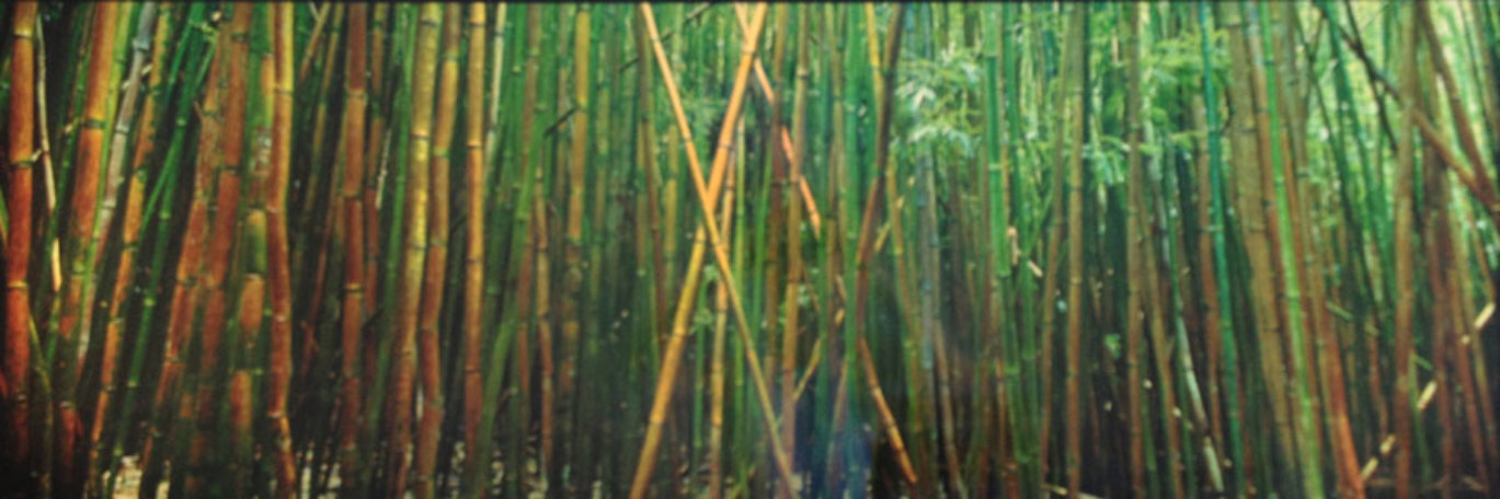 Bamboo (Pipiwai Trail, Hana, Hawaii) 1.5M Huge Panorama by Peter Lik