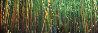 Bamboo (Pipiwai Trail, Hana, Hawaii) 1.5M Huge Panorama by Peter Lik - 0