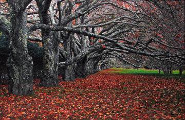 Enchanted (East Hampton, New York) Panorama by Peter Lik