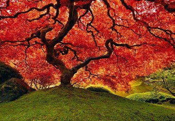 Tree of Life  1.5M Huge Panorama - Peter Lik