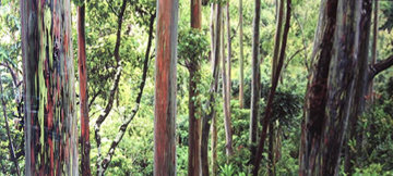Painted Forest 1.5M Huge Panorama - Peter Lik