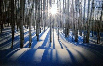 Sunlit Birches (Telluride, Colorado) Panorama - Peter Lik