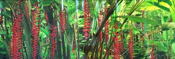Blushing Forest 1.5M Huge Panorama - Peter Lik
