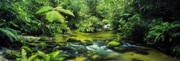 Mount Lewis Rainforest, Australia 1.5M Huge Panorama - Peter Lik