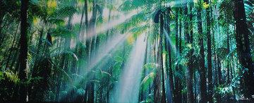 Enchanted Forest (Fraser Island, Queensland) 1.5M Huge  Panorama - Peter Lik