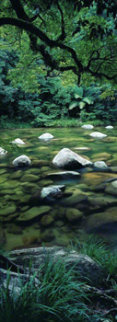 Pristine Waters (Mossman Gorge, Queensland) Panorama by Peter Lik