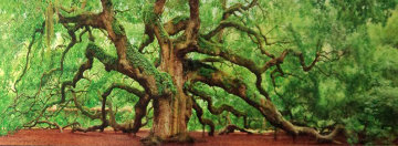 Tree of Hope AP Panorama by Peter Lik
