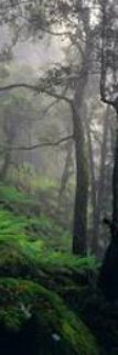 Living Forest Panorama by Peter Lik